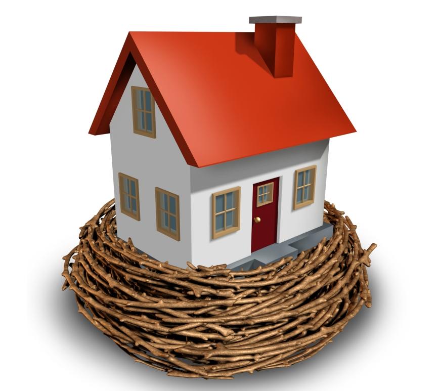 House on bird's nest