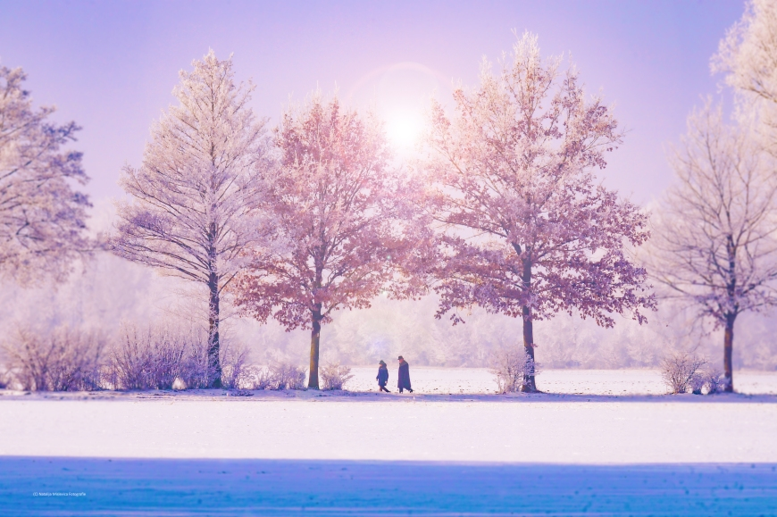 Outdoor winter scene with trees in the snow.