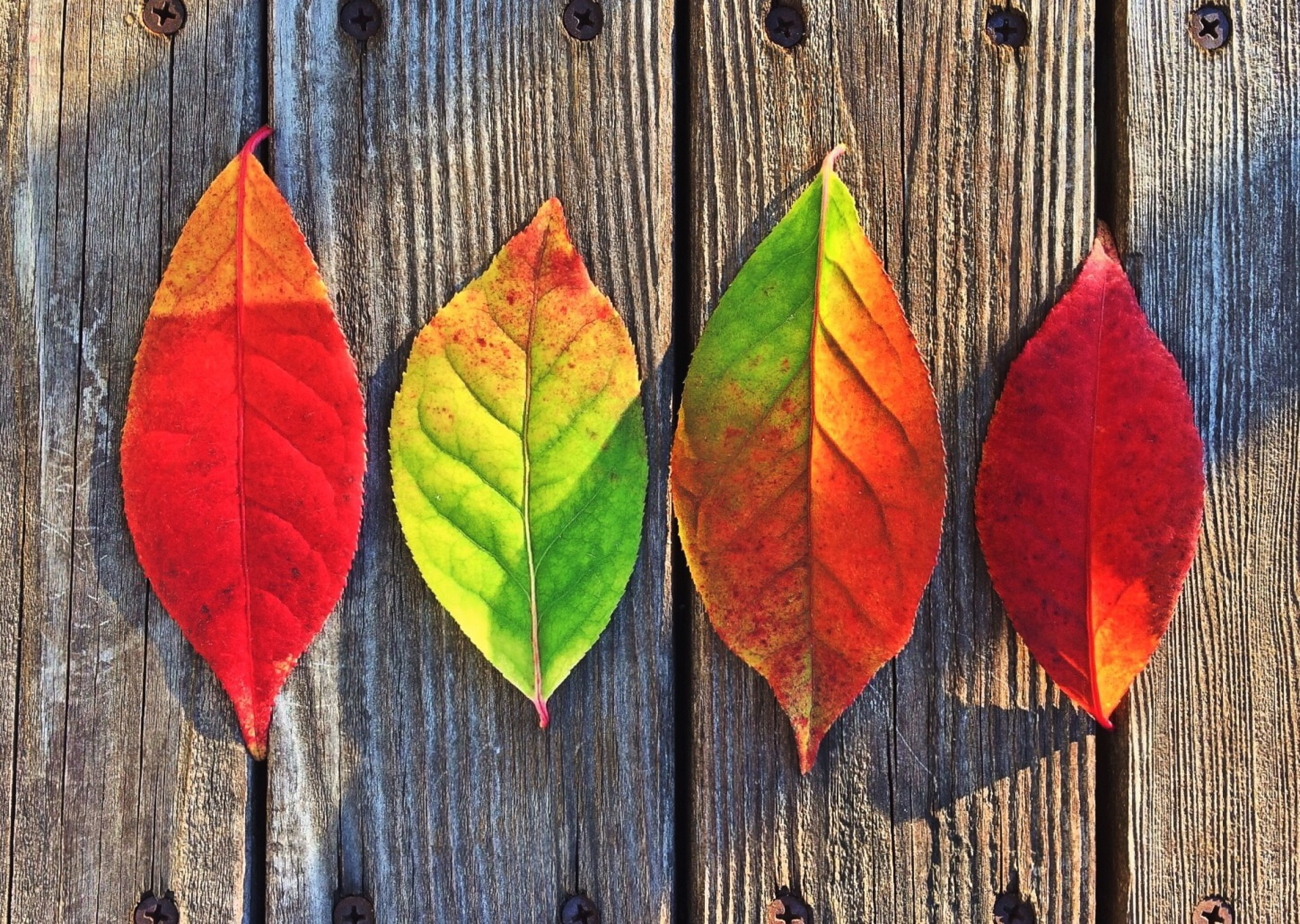 Four leaves in a line, red, yellow, and green.