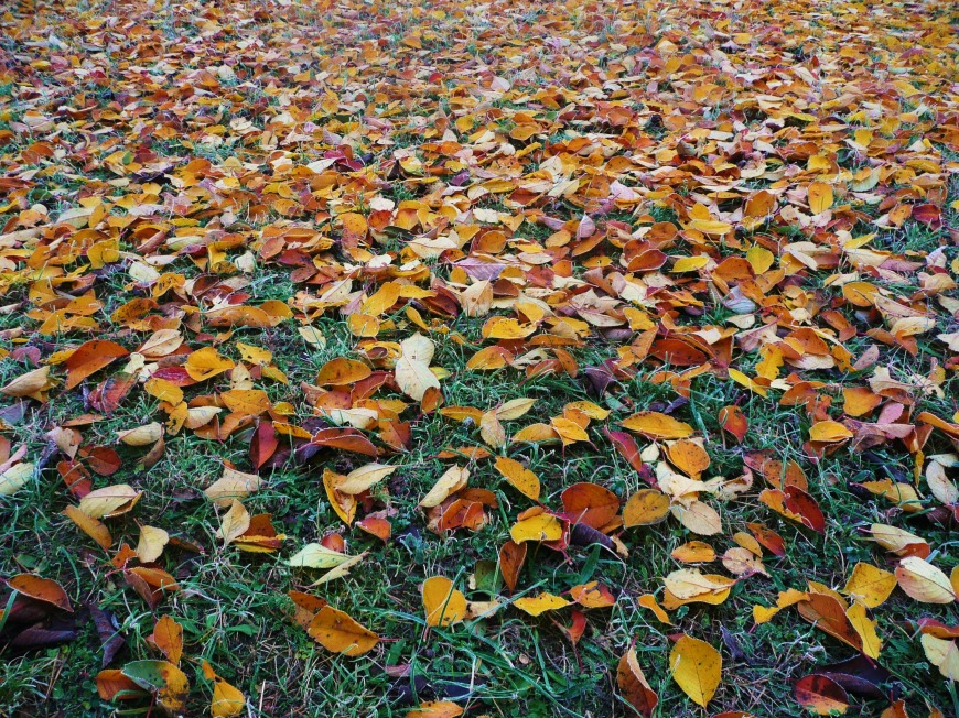 Brown, orange, and yellow leaves cover green grass.