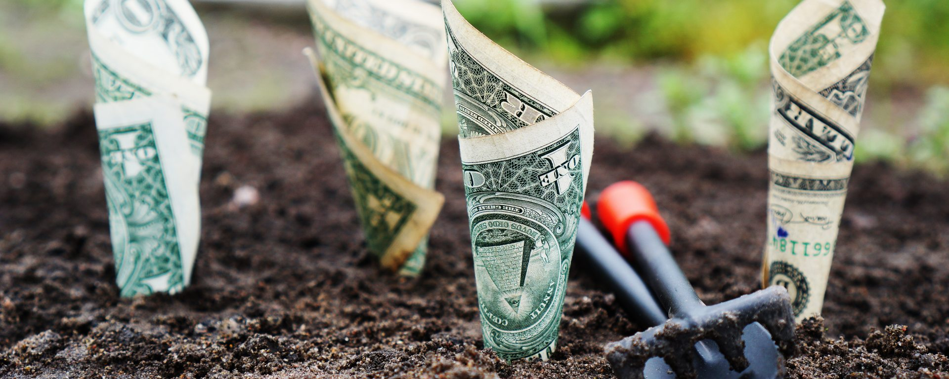 Dollar bills rolled up and planted in dirt like flowers.